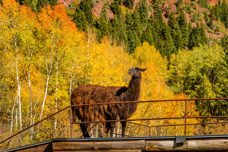 Fall Color in Aspen Colorado stock photo