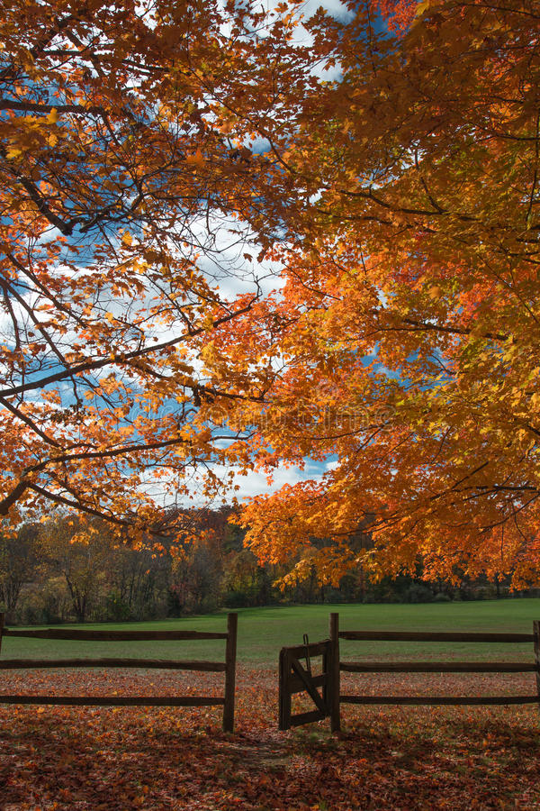 Free Fall Color At Oatlands Royalty Free Stock Photo - 61608425