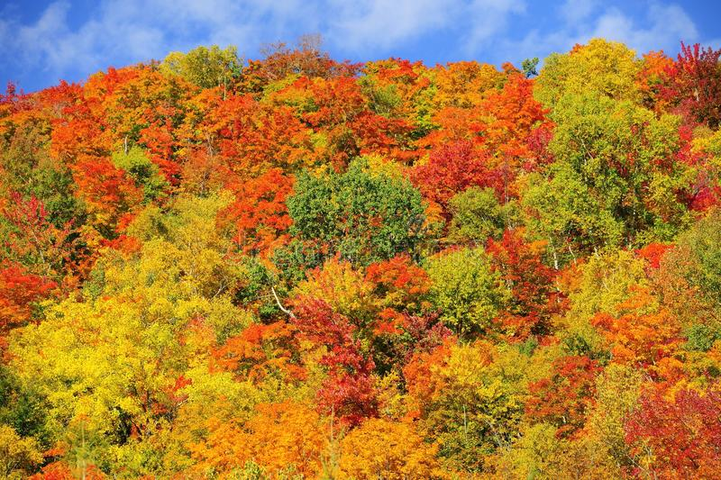 Fall color forest stock photos