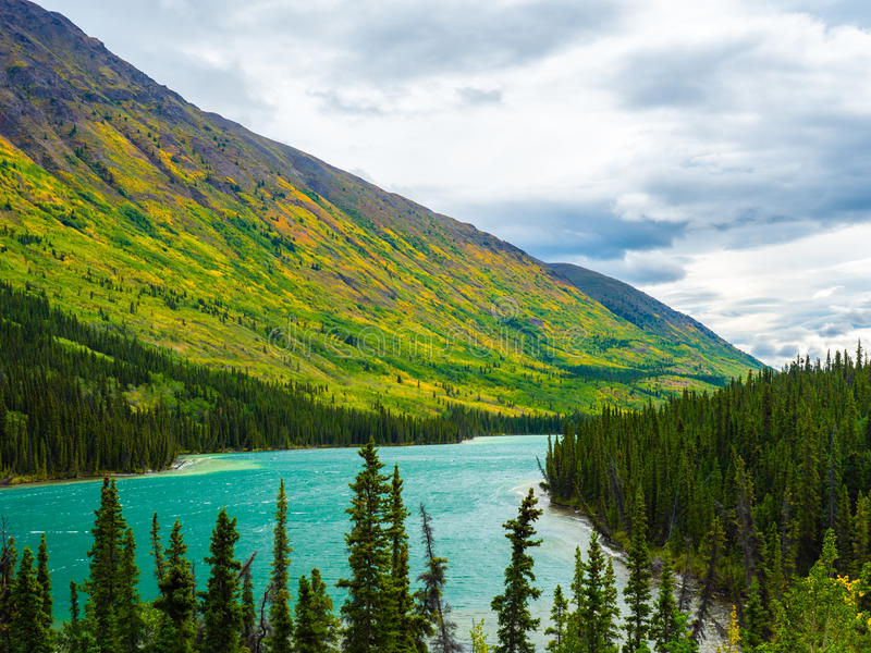 Fall color on the hill slope in Yukon Canada stock photography