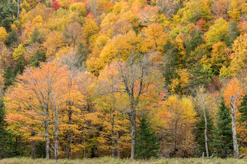 Fall color in Lake Placid NY. Fall color in the Adirondack Mountains around Lake Placid NY royalty free stock image