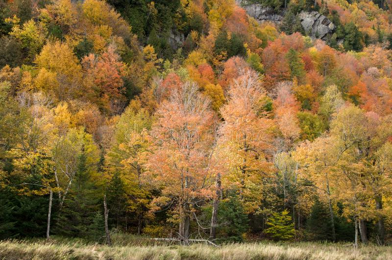 Fall color in Lake Placid NY. Fall color in the Adirondack Mountains around Lake Placid NY royalty free stock photos