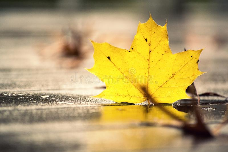 Fall color. This leaf picture clicked in fall season royalty free stock photography