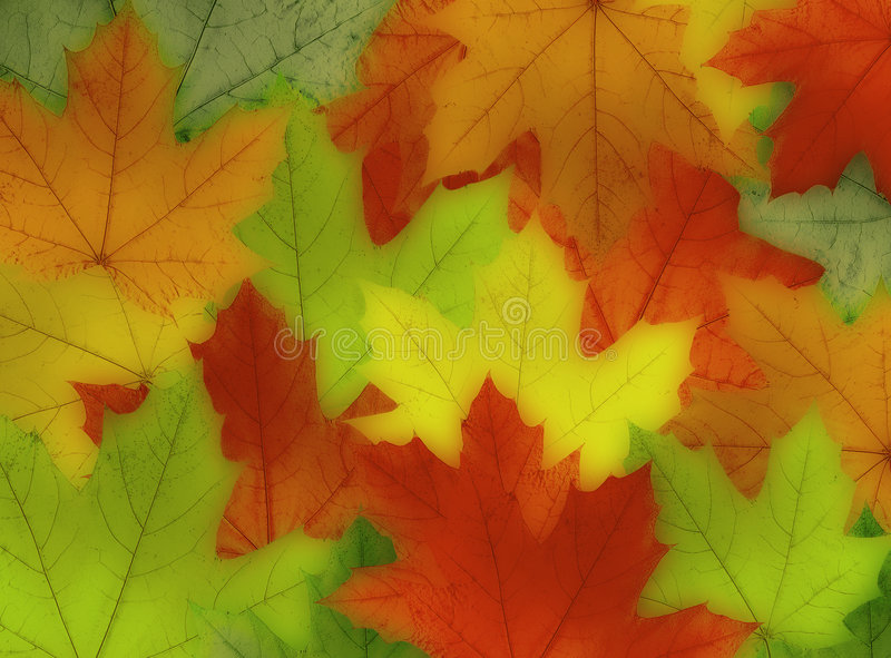 Fall color leaves. Layered on top of each other stock illustration