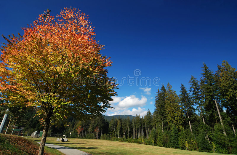 Fall color in play field stock image