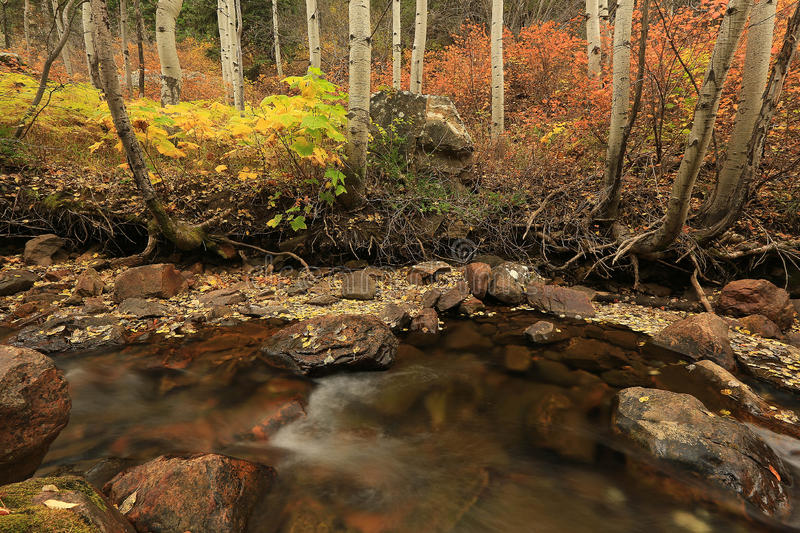 Download Fall Color By A Stream In The Utah Mountains. Stock Photo - Image of aspen, deer: 61375546