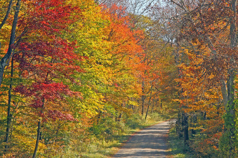 Fall color on trail upstate New York. Fall trees and nature trail upstate rural New York stock photography