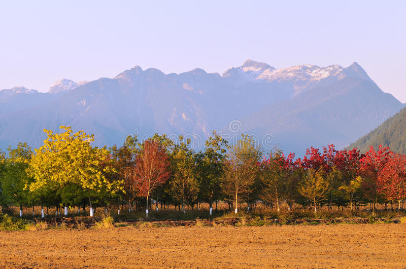 Fall color trees and mountain stock image