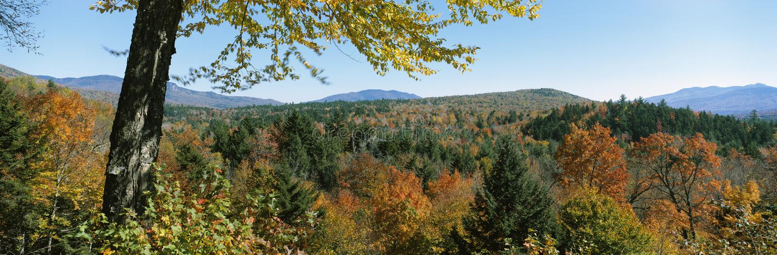 Fall color in White Mountains, New Hampshire, USA royalty free stock image