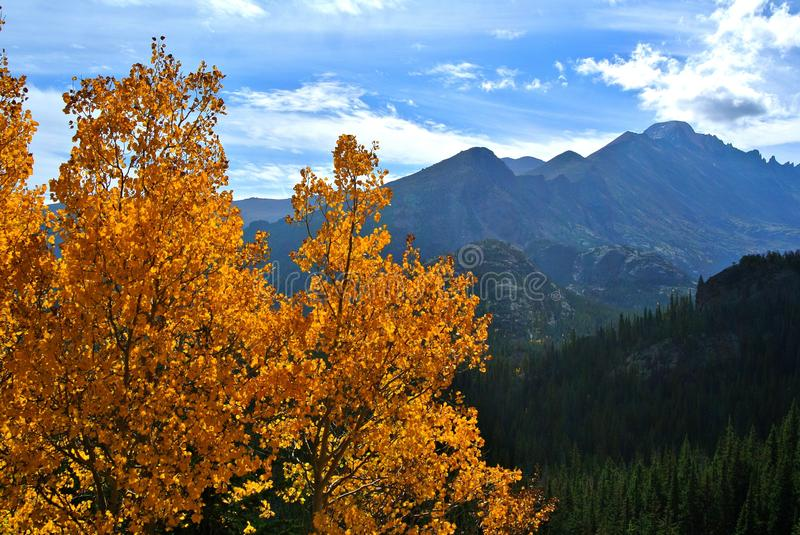 Fall colored Aspen Leaves in Rocky Mountain National Park. With mountain landscape in the background stock images