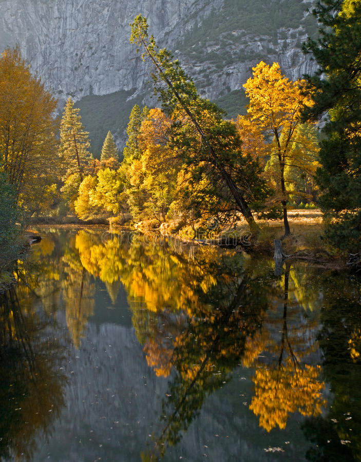 Fall colored forest reflection over the river stock photography