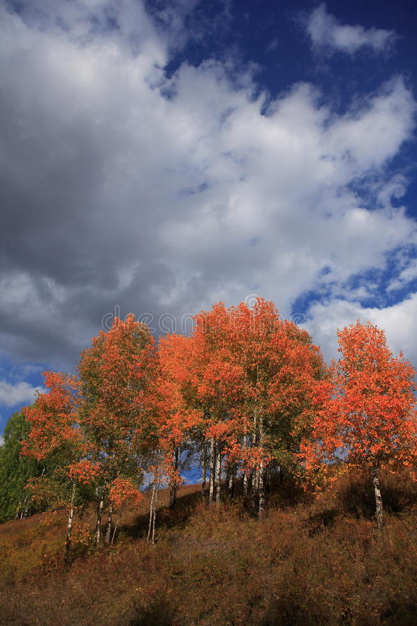 Free Fall Colored Leaves Again A Blue Sky Background. Royalty Free Stock Photography - 13208727
