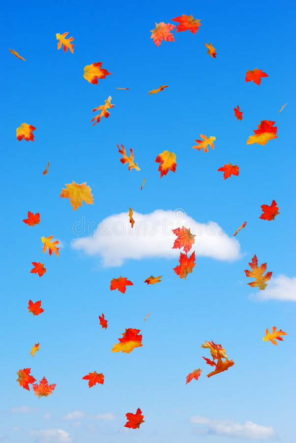 Free Fall Colored Leaves Falling On A Blue Sky Clouds Royalty Free Stock Photo - 8815465
