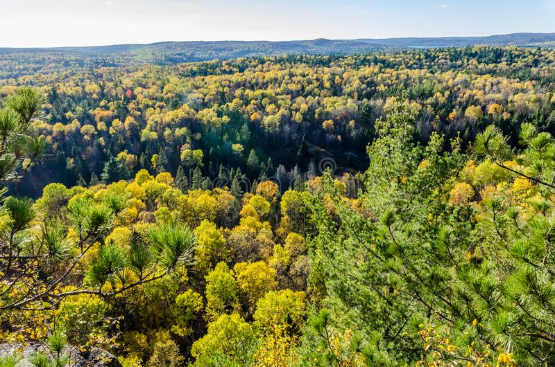 Colorful trees. Fall colorful trees in Algonquin park . Ontario, Canada stock image