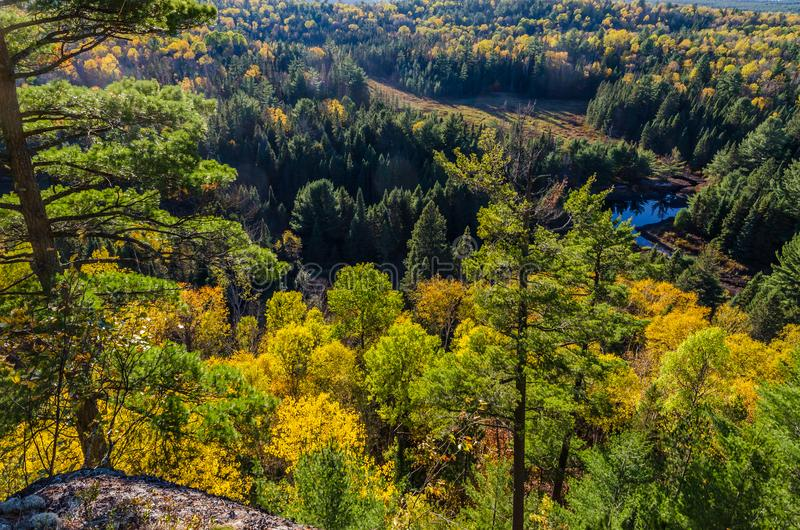 Colorful trees. Fall colorful trees in Algonquin park . Ontario, Canada royalty free stock photo