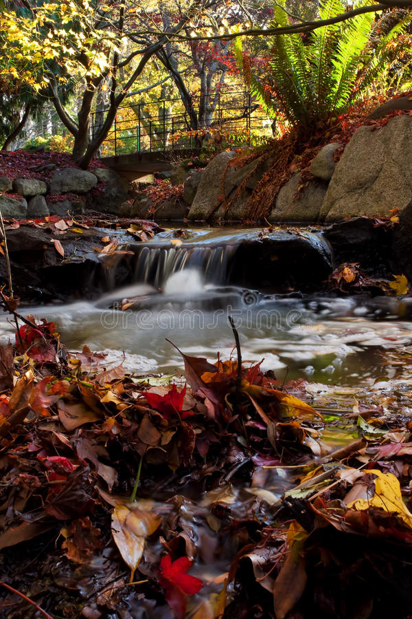 Download Fall Colors stock image. Image of island, buildings, afternoon - 11594757