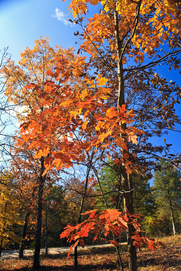 Download Fall Colors stock photo. Image of history, living, heritage - 12170736