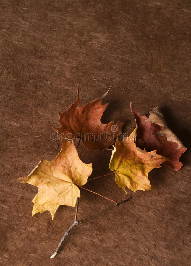 Download Fall Colors stock photo. Image of colorful, isolated - 13412166