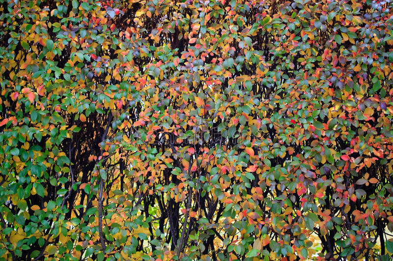 Download Fall Colors Royalty Free Stock Image - Image: 16255226