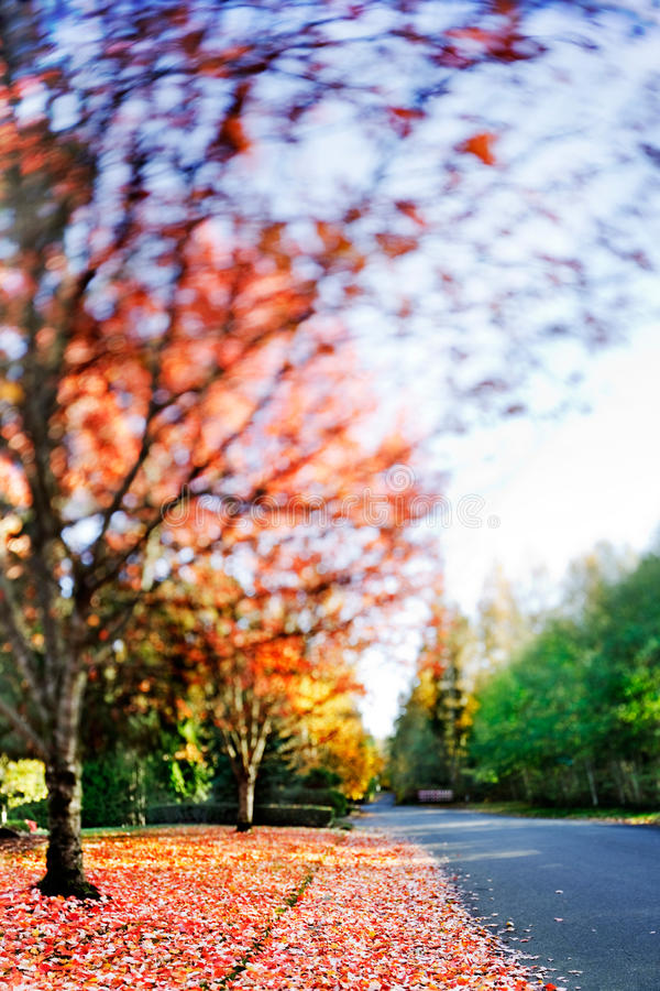 Download Fall Colors Royalty Free Stock Photography - Image: 19966727