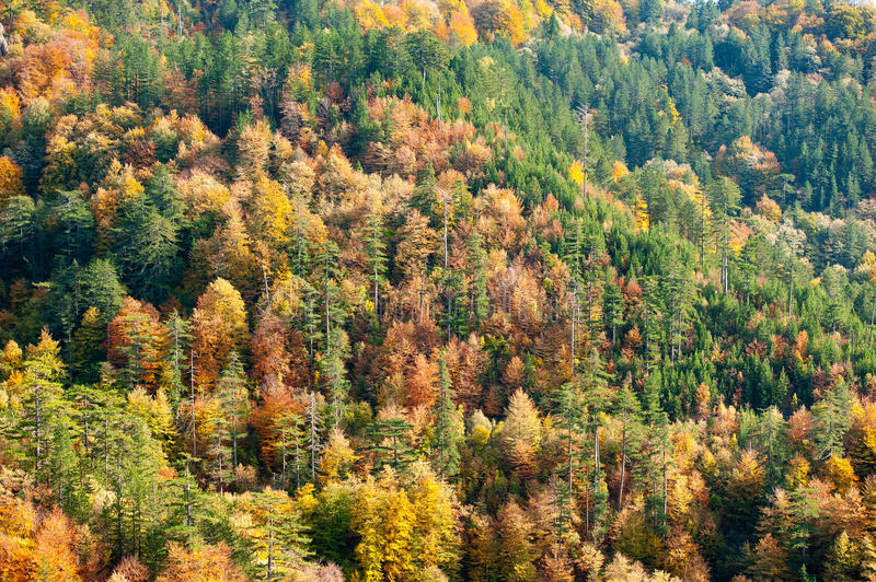 Download Fall colors stock photo. Image of ecology, green, branch - 21868698