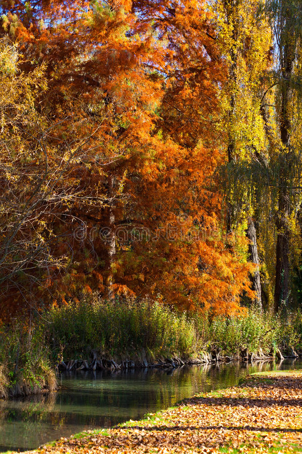 Download Fall Colors Stock Photo - Image: 23080200