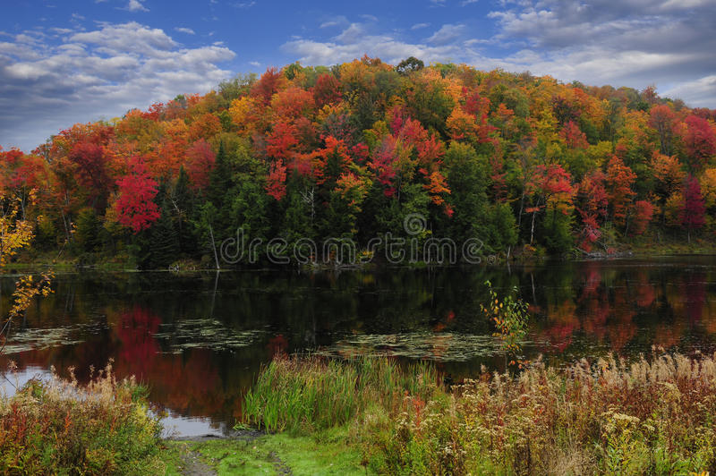 Download Fall Colors stock photo. Image of yellow, vista, forest - 28551578