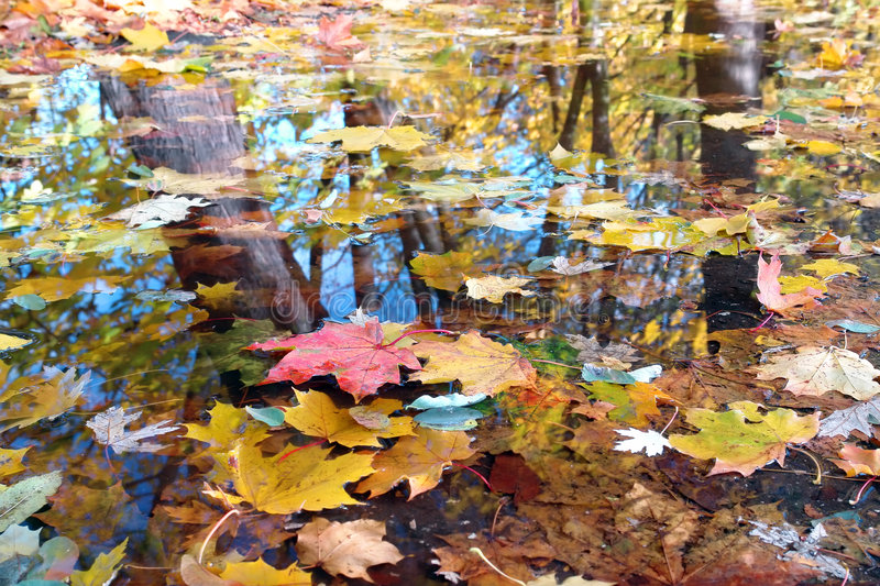 Download Fall colors stock image. Image of colors, reflection, colorful - 3437753