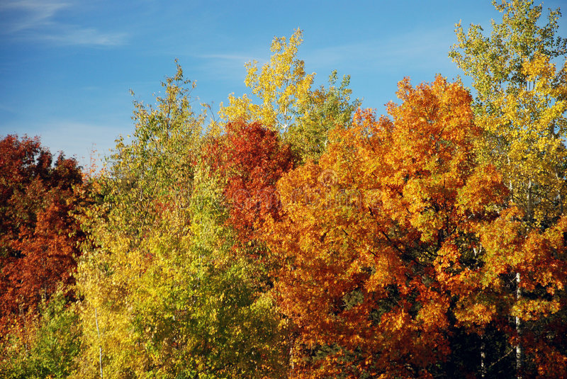 Fall colors. Beautiful fall colors in Afton State Park, Minnesota stock images
