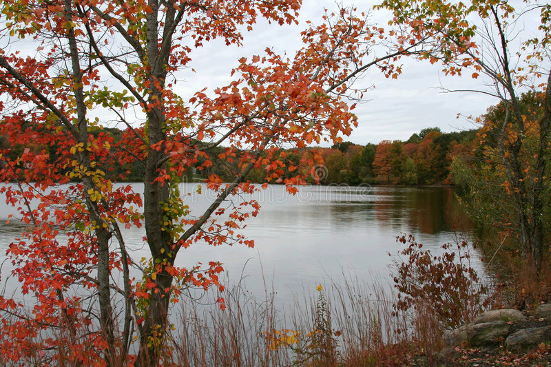 Download Fall Colors stock photo. Image of fall, woods, cloudy - 5660530