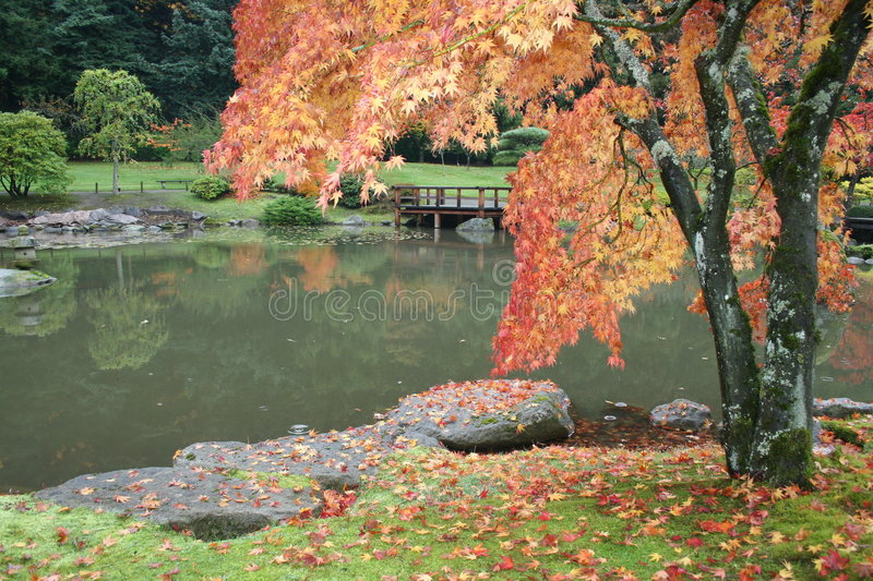 Fall colors royalty free stock image