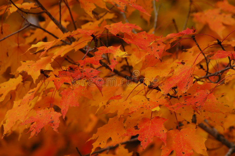 Download Fall colors stock photo. Image of colors, ozark, fall, trees - 931830