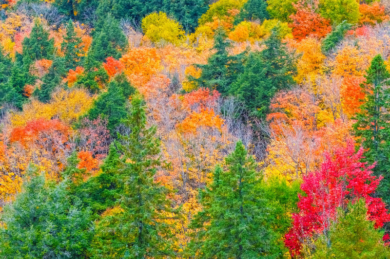 Fall colors Algonquin Park, Ontario, Canada. stock photography