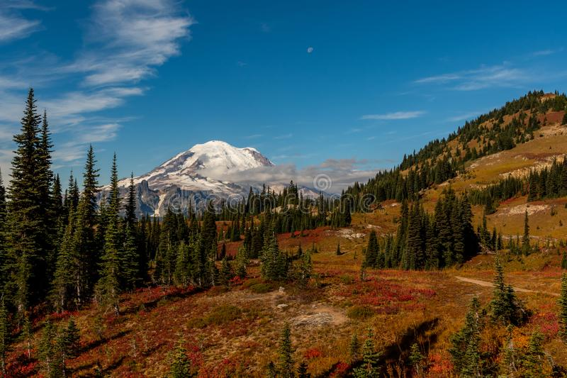Fall Colors Along Mountain in Front of Mount Rainier stock images