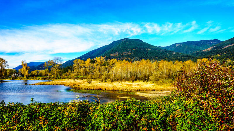 Fall Colors around Nicomen Slough, a branch of the Fraser River, as it flows through the Fraser Valley. Of British Columbia, Canada royalty free stock images