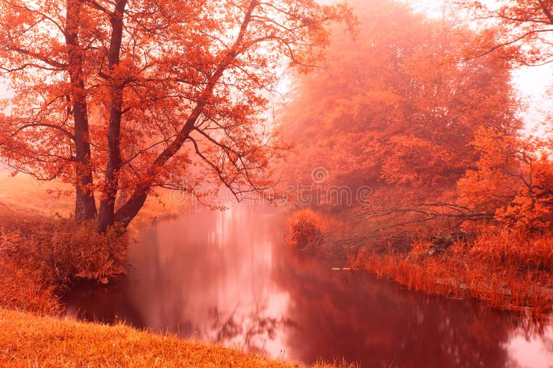 Fall colors on autumn foggy river stock photos