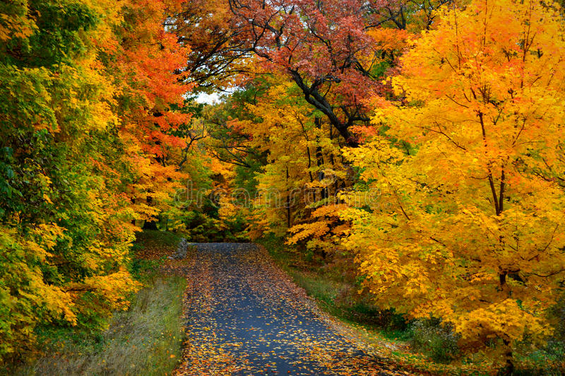 Fall Road. Gorgeous display of fall colors, leaves, red, orange, green & yellow trees with a black top road leading your eye through the picture. This photo was