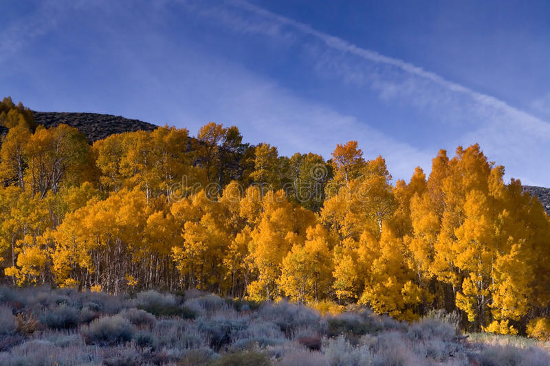 Fall Colors in the Eastern Sierra stock image