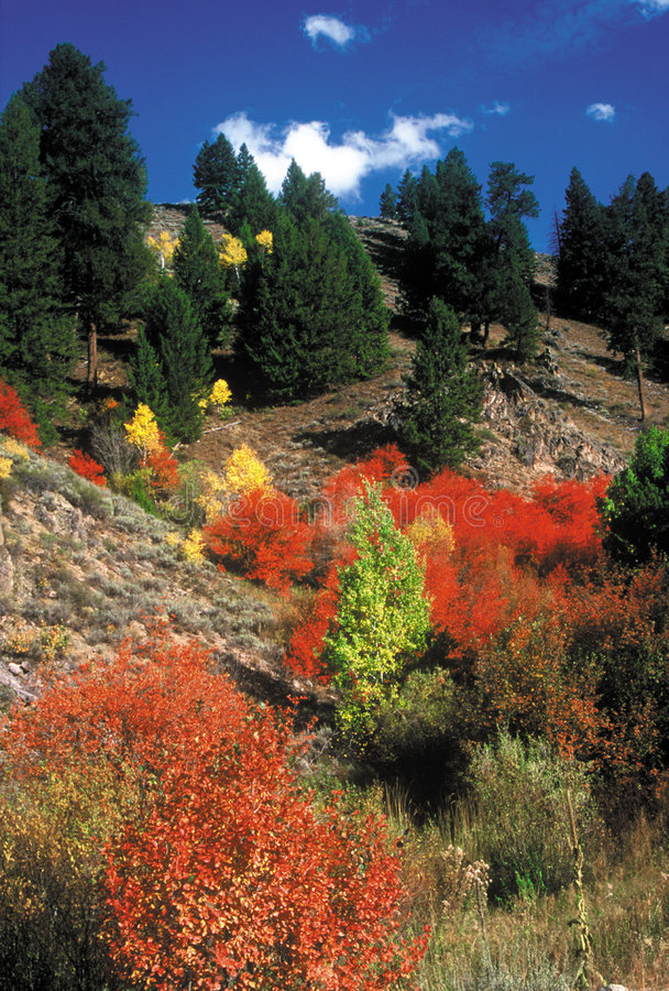 Fall Colors Fairfield, Idaho stock photography