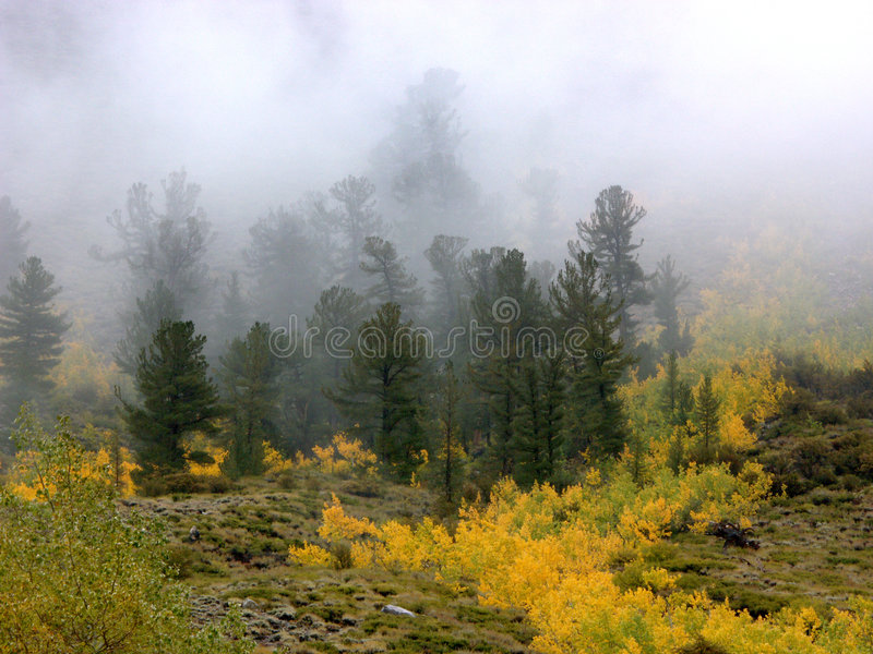 Download Fall colors and Fog stock image. Image of clouds, bishop - 394095