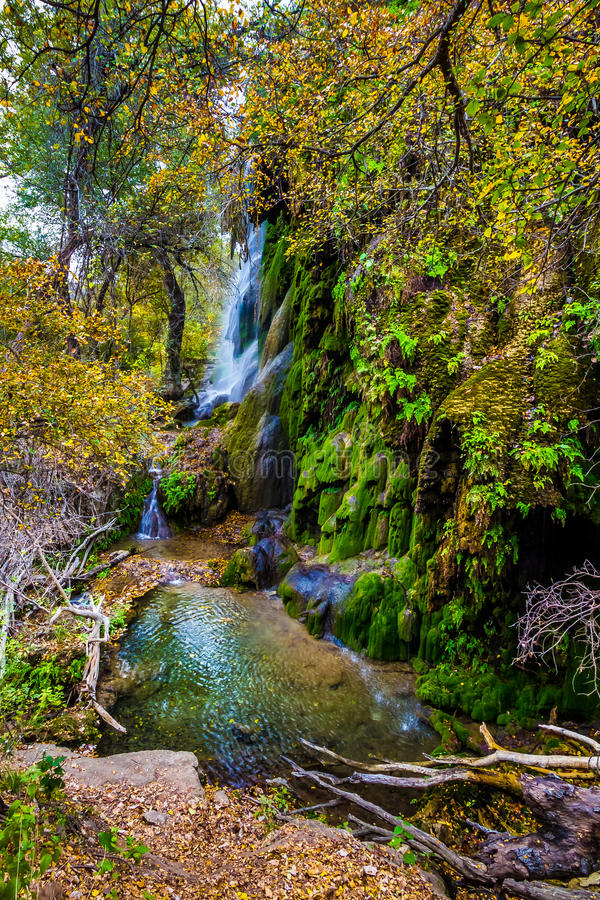 Fall Colors at Gorman Falls, Texas. Bursting Colors of Fall Foliage Surrounding the Picturesque Gorman Falls Covered with Deep Rich Green Moss, Deep in Woods of stock photography