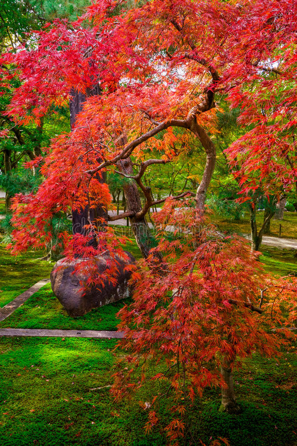Free Fall Colors In Japan Stock Photo - 63426480