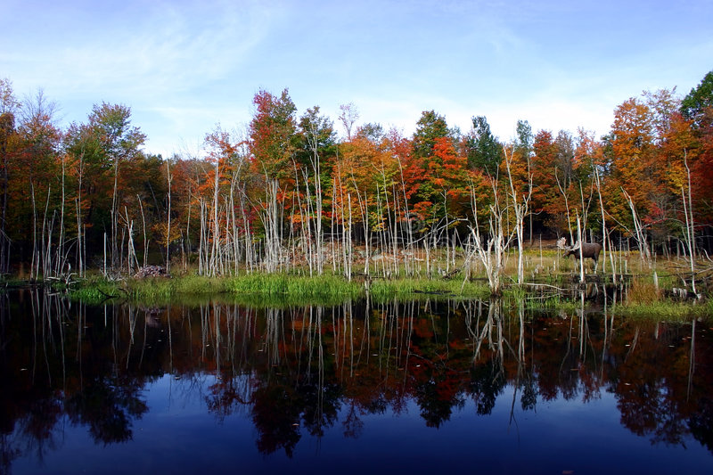 Fall Colors by the Lake royalty free stock image
