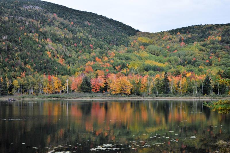 Fall colors in Maine royalty free stock images