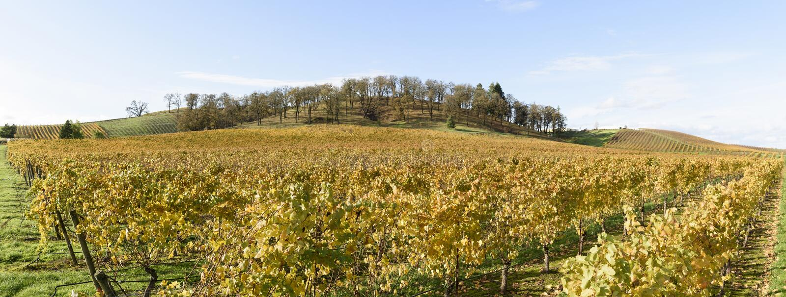 Fall Colors of Mid-Willamette Valley Vineyards in Western Oregon stock image