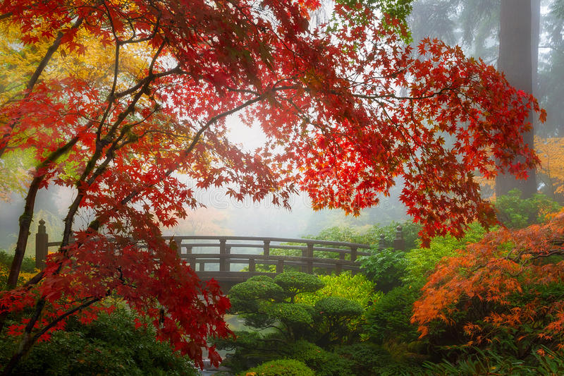 Fall Colors by the Moon Bridge in Portland Japanese Garden in Oregon stock photography