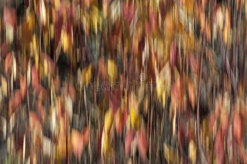 Fall Colors in Motion stock photography