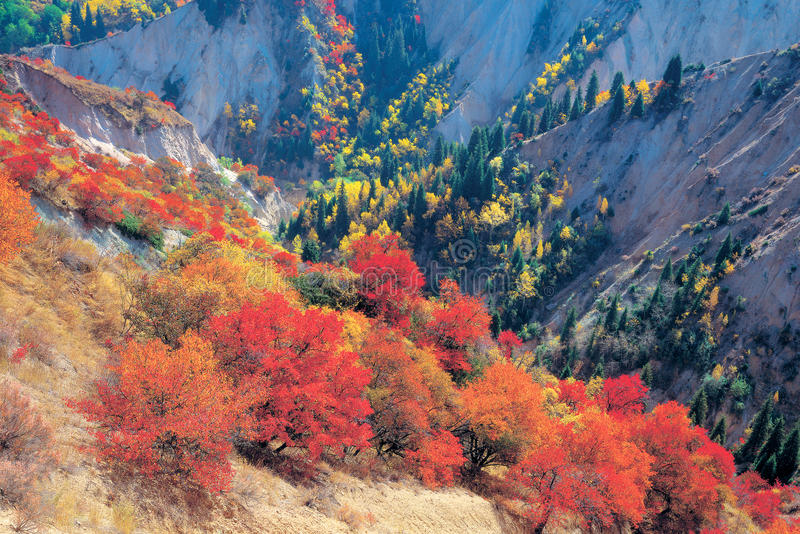 Fall colors of mountains royalty free stock photos