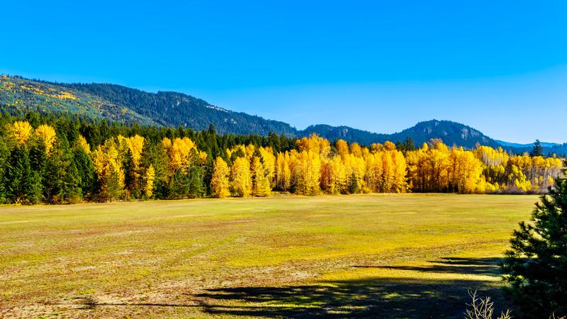 Fall colors at Boston Bar in BC Canada royalty free stock images