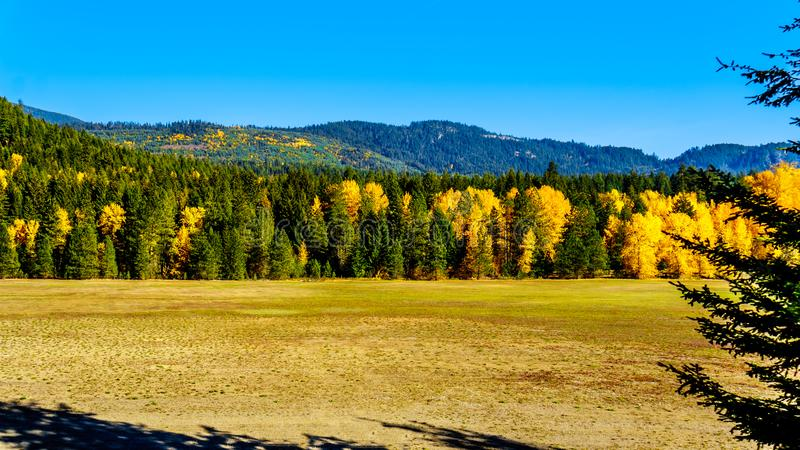 Fall colors at Boston Bar in BC Canada. Fall colors north of the town of Boston Bar along the Fraser Canyon route of the Trans Canada Highway, Highway 1, in royalty free stock photography